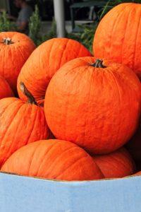 かぼちゃ オータムゴールド