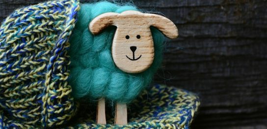 羊とニット