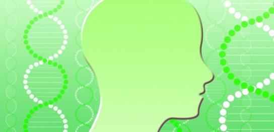 脳科学のイメージ